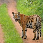 Tips To Booking Tadoba Jungle Safari Online And Save Time