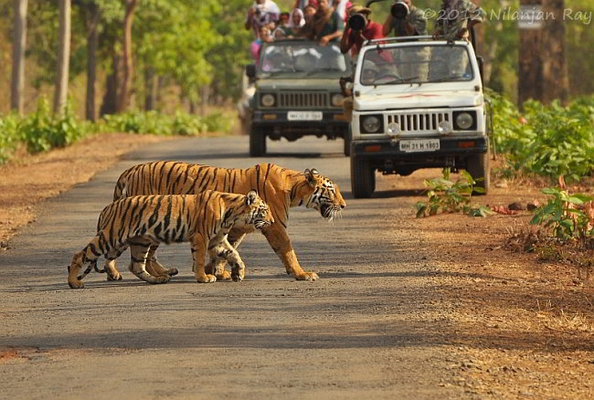 tadoba jeep safari - confirm jungle safari booking