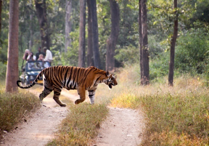 Beautiful Animals And Birds Of Tadoba National Park